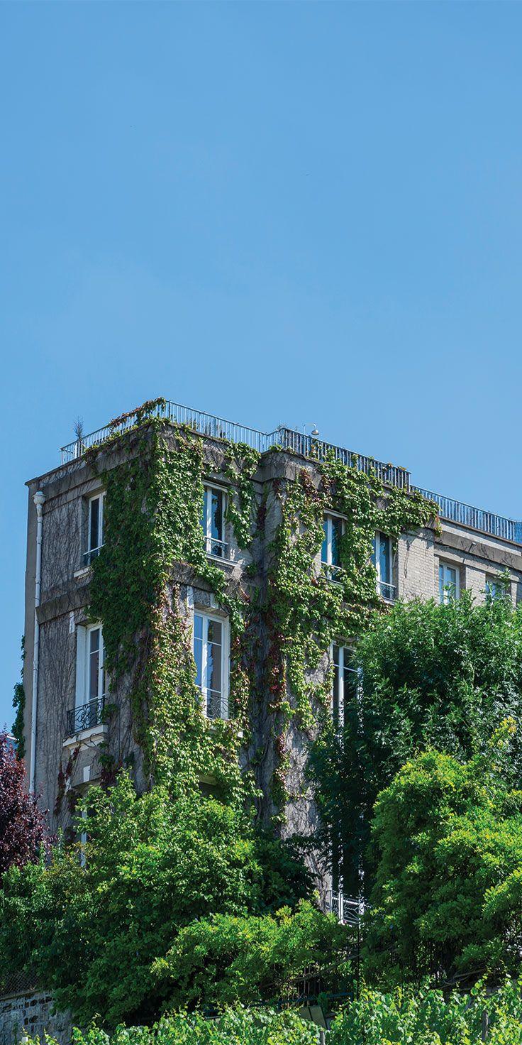 Vineyard in Montmartre, Paris - by Lauren Bath