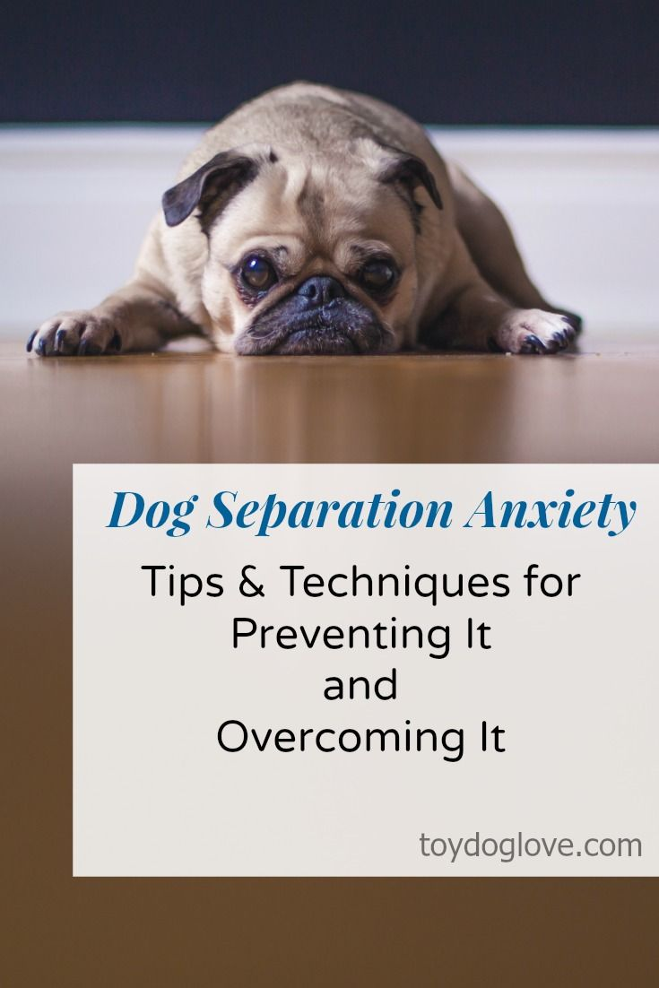 Tips for dealing with and overcoming Dog Separation Anxiety - ToyDogLove