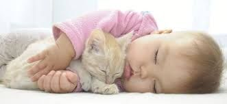 Resultado de imagen para gatitos bebes