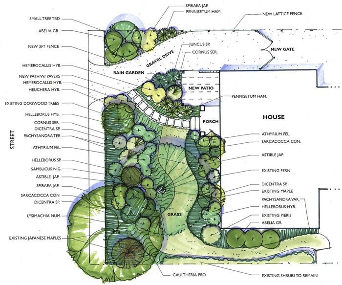 35 best plan graphics plants images on pinterest for Landscape plan drawing