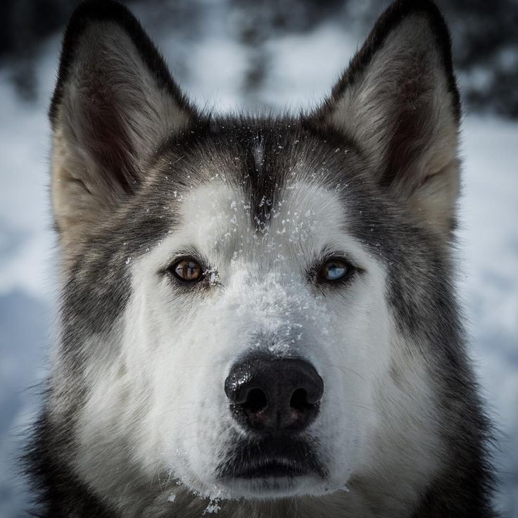 Owner Takes Husky On Epic Adventures Proving Dogs Belong In The - Guy quits his job to go on epic adventures with his husky