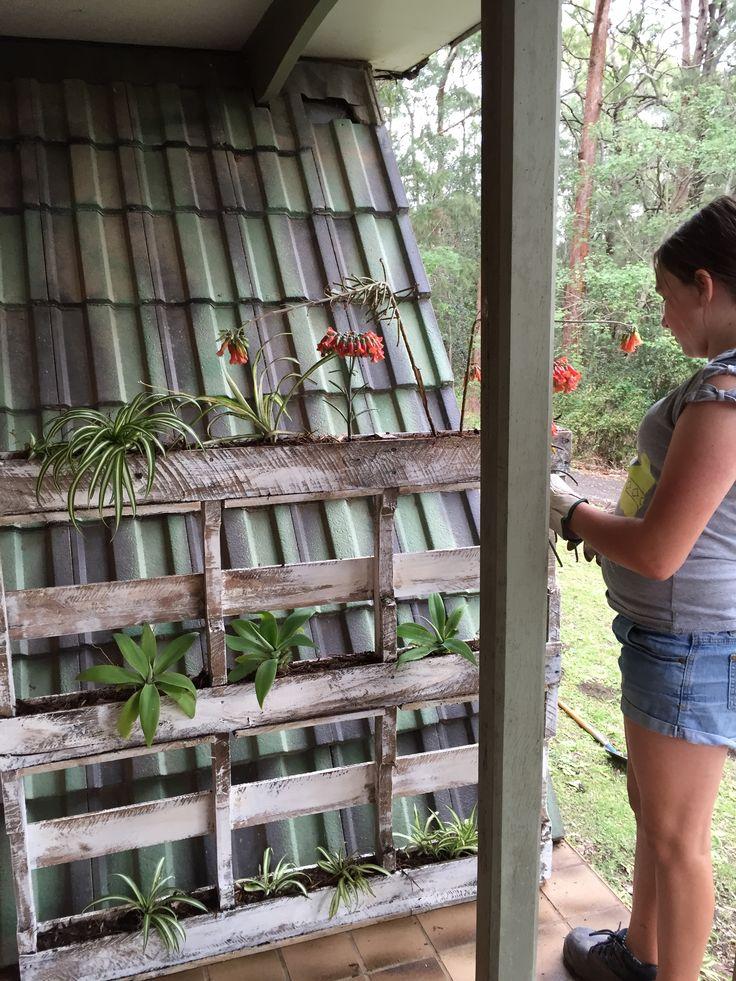 Pallet Planter by Bron Lowe at ProjectGuru.com.au