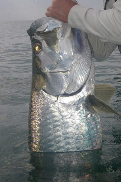 Sport Fishing in Tortuguero Costa Rica