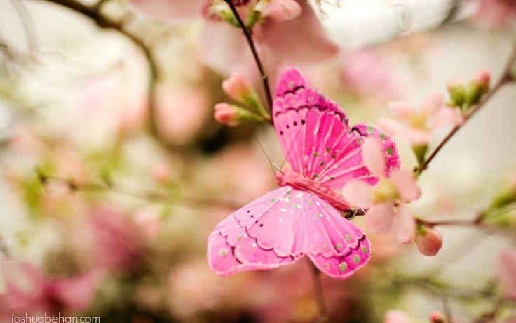 Fond d'écran Belles fleurs : Insect Nature Belles fleurs matériel ...