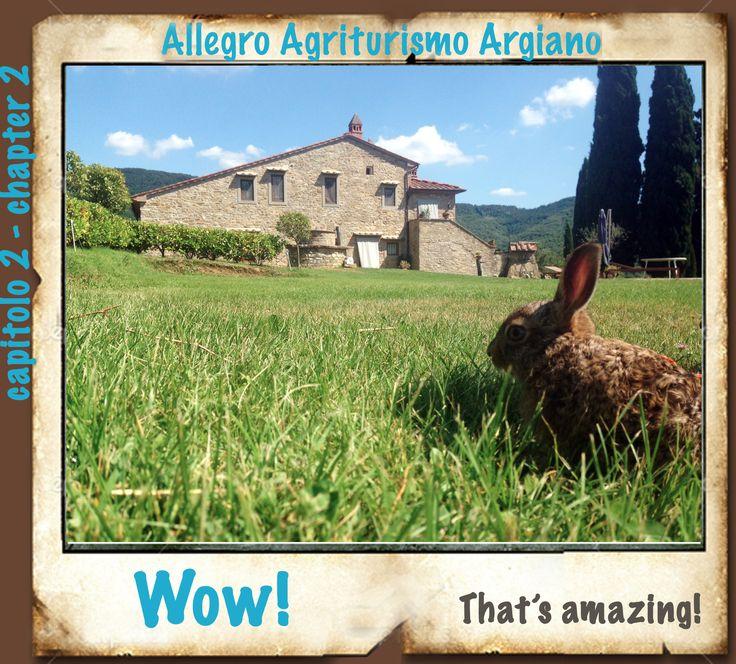 20 Giugno ore 13,40/ 20th June, 1:40 p.m., Argiano Quel giorno ero con mia mamma, avevo imparato a saltellare da poco e, un balzo qua e uno la, mi sono trovata in un posto favoloso: L'Allegro Agriturismo Argiano.. tanta erba verde e ruscelli di acqua fresca!  That day I was with my mum, I had just learned to hop and jump here and there, I found myself in a fabulous place: the Allegro Agriturismo Argiano - lots of green grass and fresh water streams !