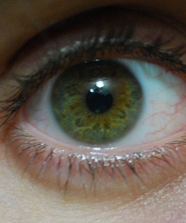 10 best images about the eyes have it on pinterest hazel