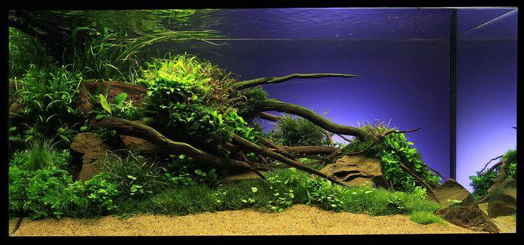 Aquascaping | Marcel Dykierek und das Aquascaping - Wasserpflanzen ...