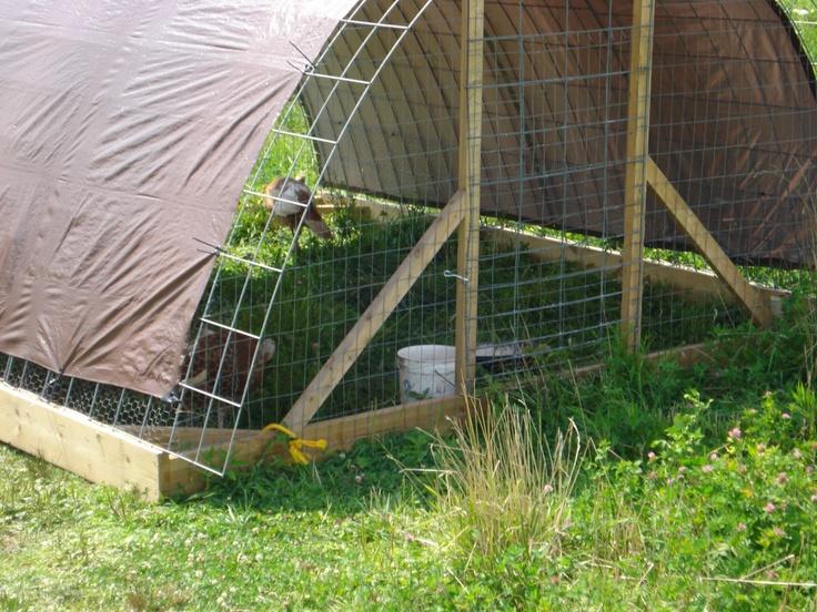 Amazing chicken coop idea!!! Ohiofarmgirl's Adventures In The Good Land: Hoop houses - good for turkeys!