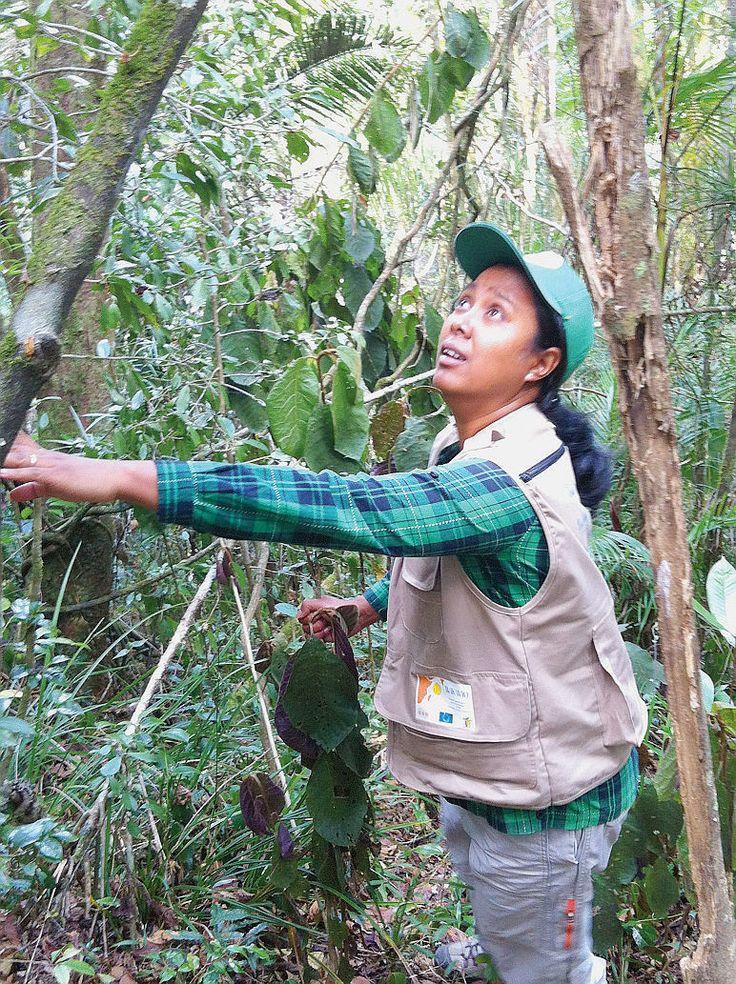 La tragique ruée vers l'or rouge de Madagascar