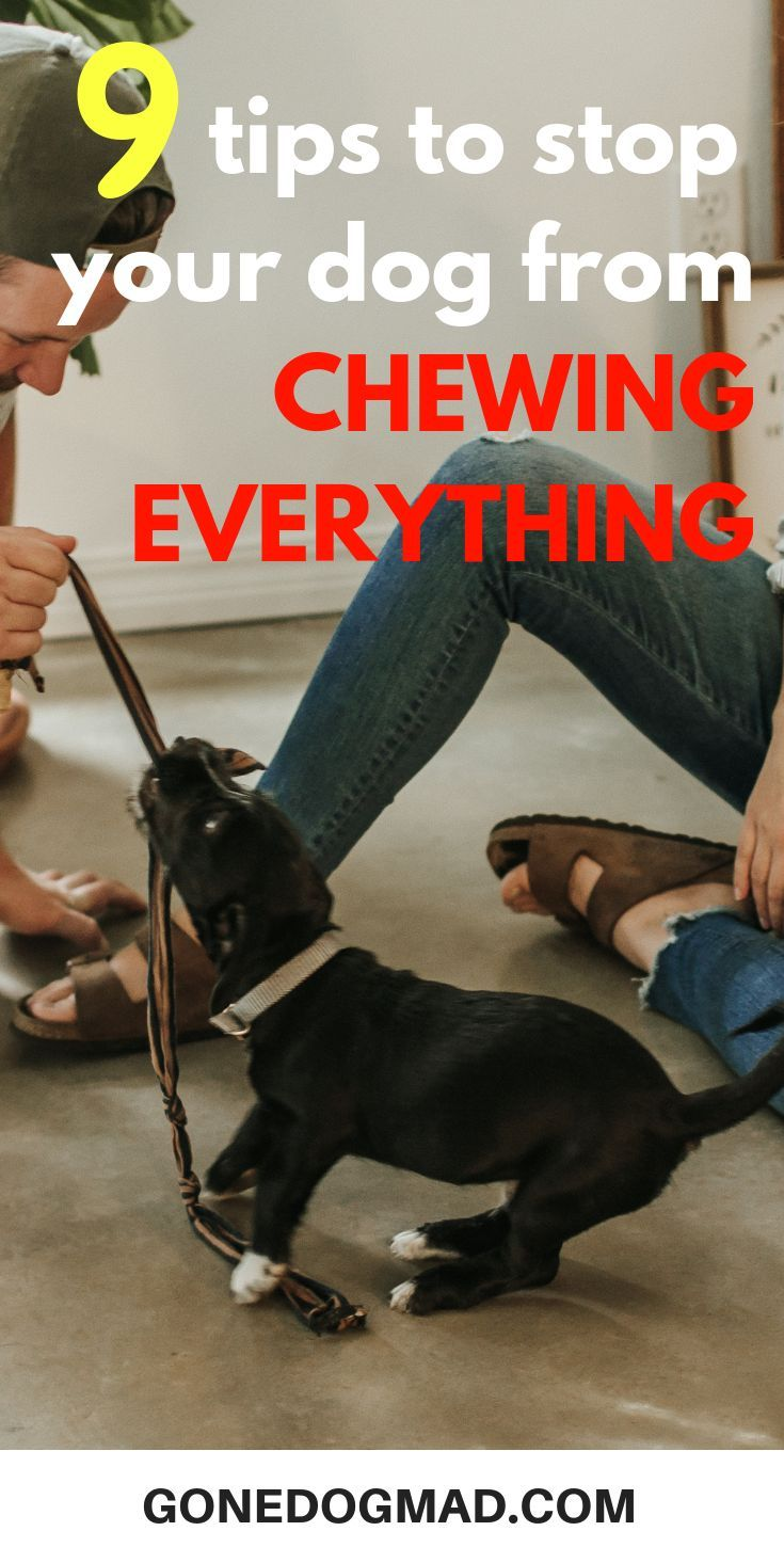 How To Stop A Dog From Chewing Everything In Your Home Dog Training Dog Training Techniques Training Your Puppy