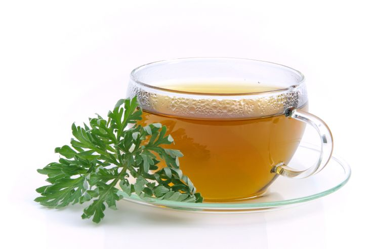 How to Brew Artemisia Annua Tea for Health Benefits