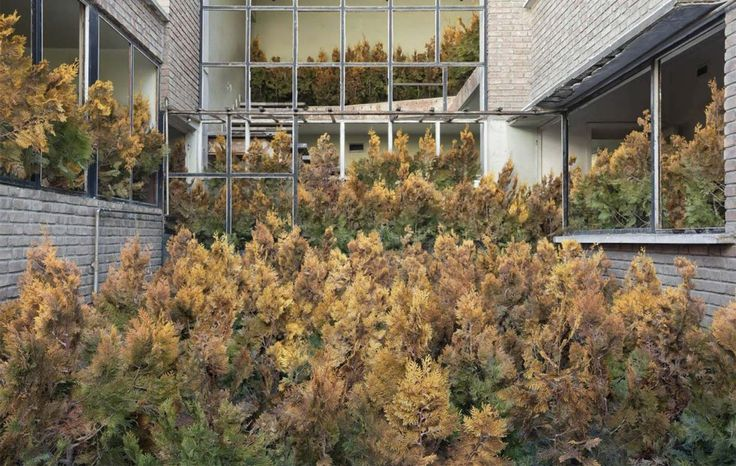 Gohar Dashti è una delle autrici più interessanti nel panorama della fotografia contemporanea.. Nella sua ultima serie, Home, ruderi desolati, case abbandonate, effetto inesorabile e spettro dei conflitti sanguinosi che hanno coinvolto l'Iran, rivivono nel ritorno al predominio dell'elemento naturale sull'architettura.