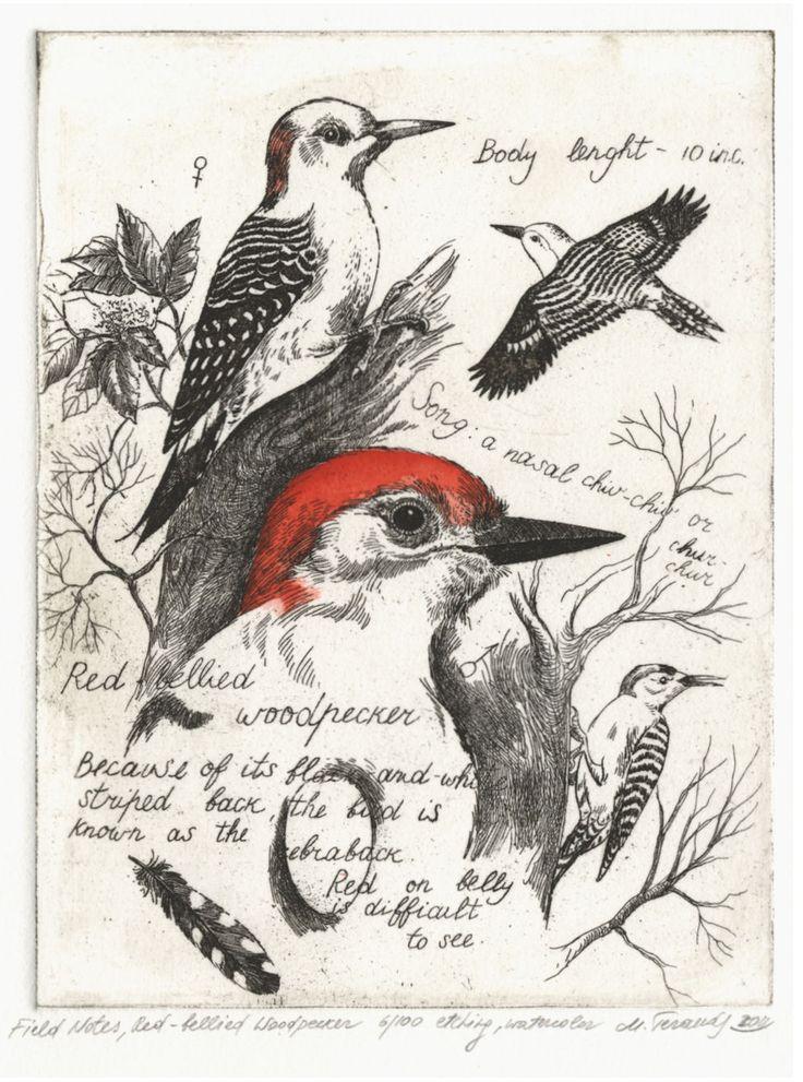 http://www.marinaterauds.com/etchings/fnredbelliedwoodpecker/images/006-17657.jpg