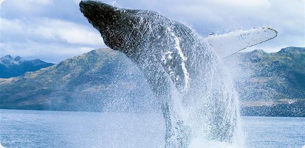 Ver la fauna del Estrecho de Magallanes