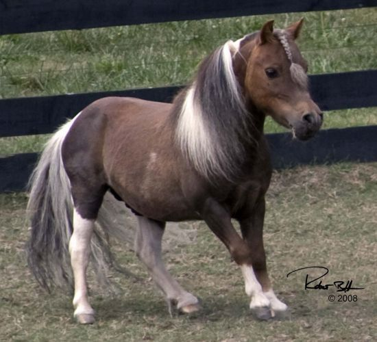 Baby Arabian Horses for Sale | ... horses for sale, Doberman stud, equine massage services and so much