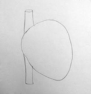 How to draw Internal structure of mammalian Heart   Heart ...