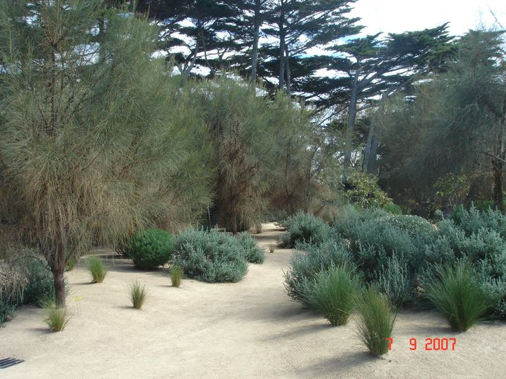 92 best Mediterranean garden images on Pinterest Mediterranean