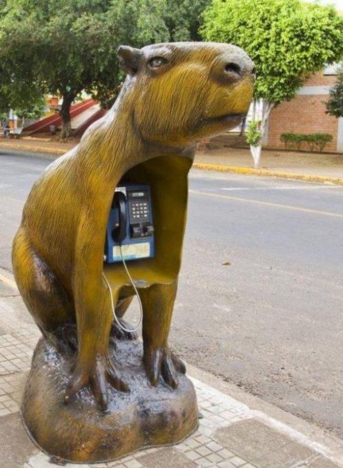 Capybara phonebook!  :D