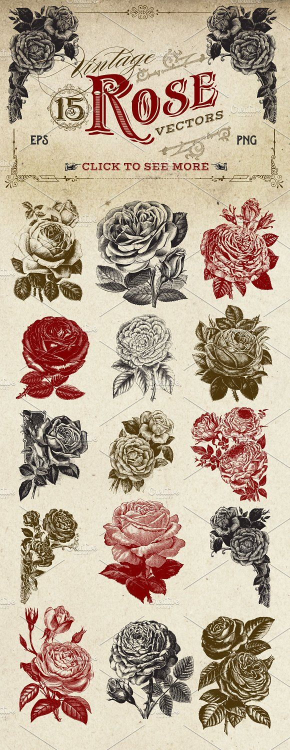 Vintage Rose Vector Graphics by Eclectic Anthology on @creativemarket