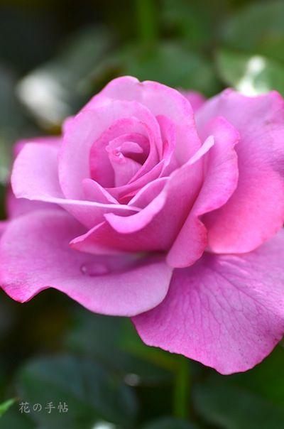 バーブラ ストライサンド(Rose Barbra Streisand)