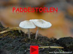 paddenstoelen www.digibordonderbouw.nl