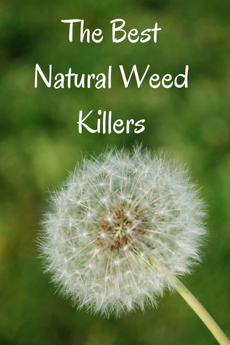 Driveway Weed Killer >> The best natural weed killer recipes. These really work for your lawn and garden (and driveway ...