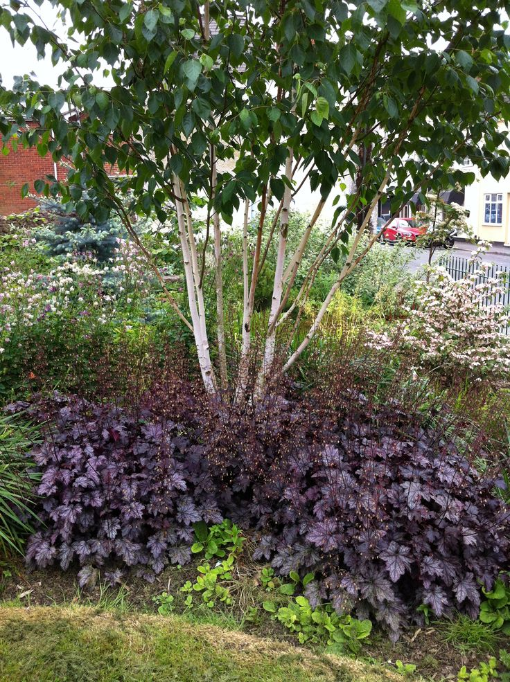 The 21 best images about client photos hoton pc on for Garden trees shrubs