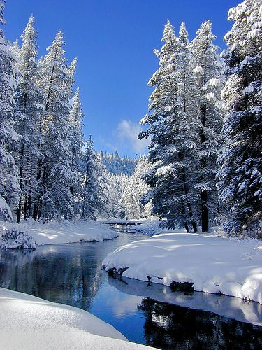 ✯ Donner Creek, snow and trees