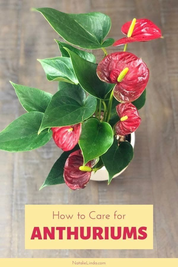 Pin On Plant Care Houseplant