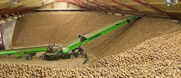 Осенняя уборка и хранение урожая картофеля