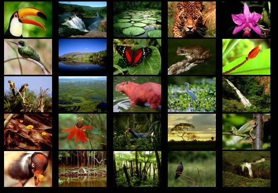of rain forest species - photo #21