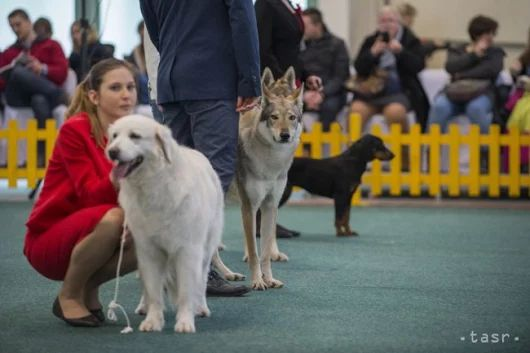 V Bratislave predstavili verejnosti slovenské národné plemená psov
