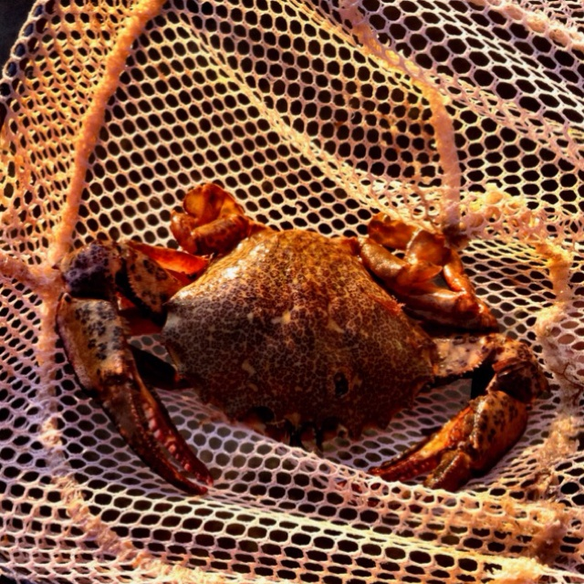 195 best images about crabbing on pinterest stone crab for Crab fishing oregon