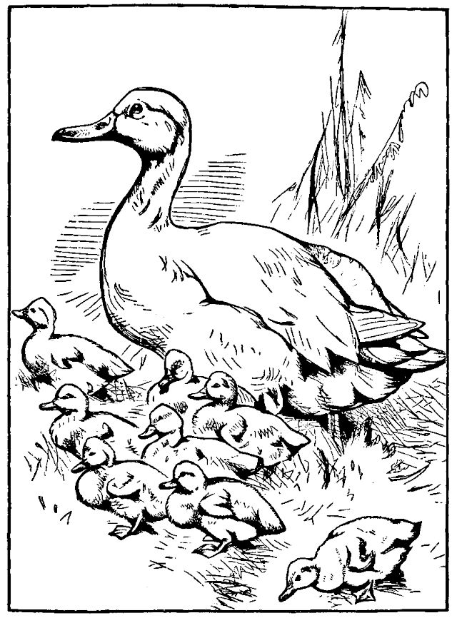Free printable ugly duckling coloring pages murderthestout for Duckling coloring pages
