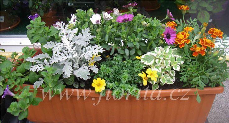 kvetinarstvi-praha-vysazovani-truhliku-na-objednavku-rozvoz-kvetin-po-praze