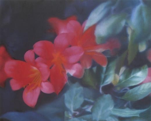 Blumen - Gerhard Richter