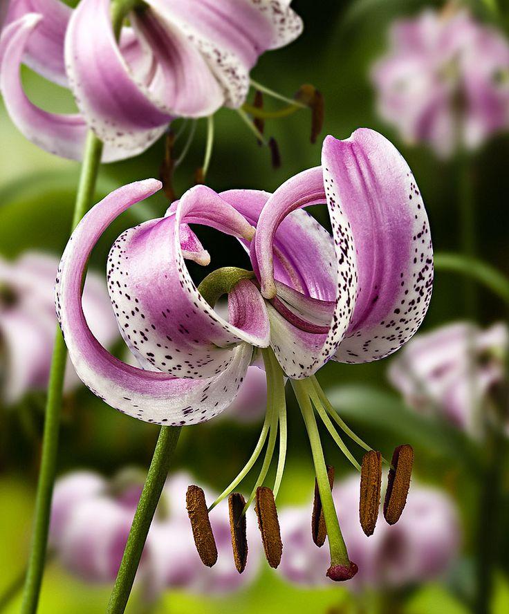 106 besten the most beautiful flowers die sch nsten aller blumen bilder auf pinterest. Black Bedroom Furniture Sets. Home Design Ideas