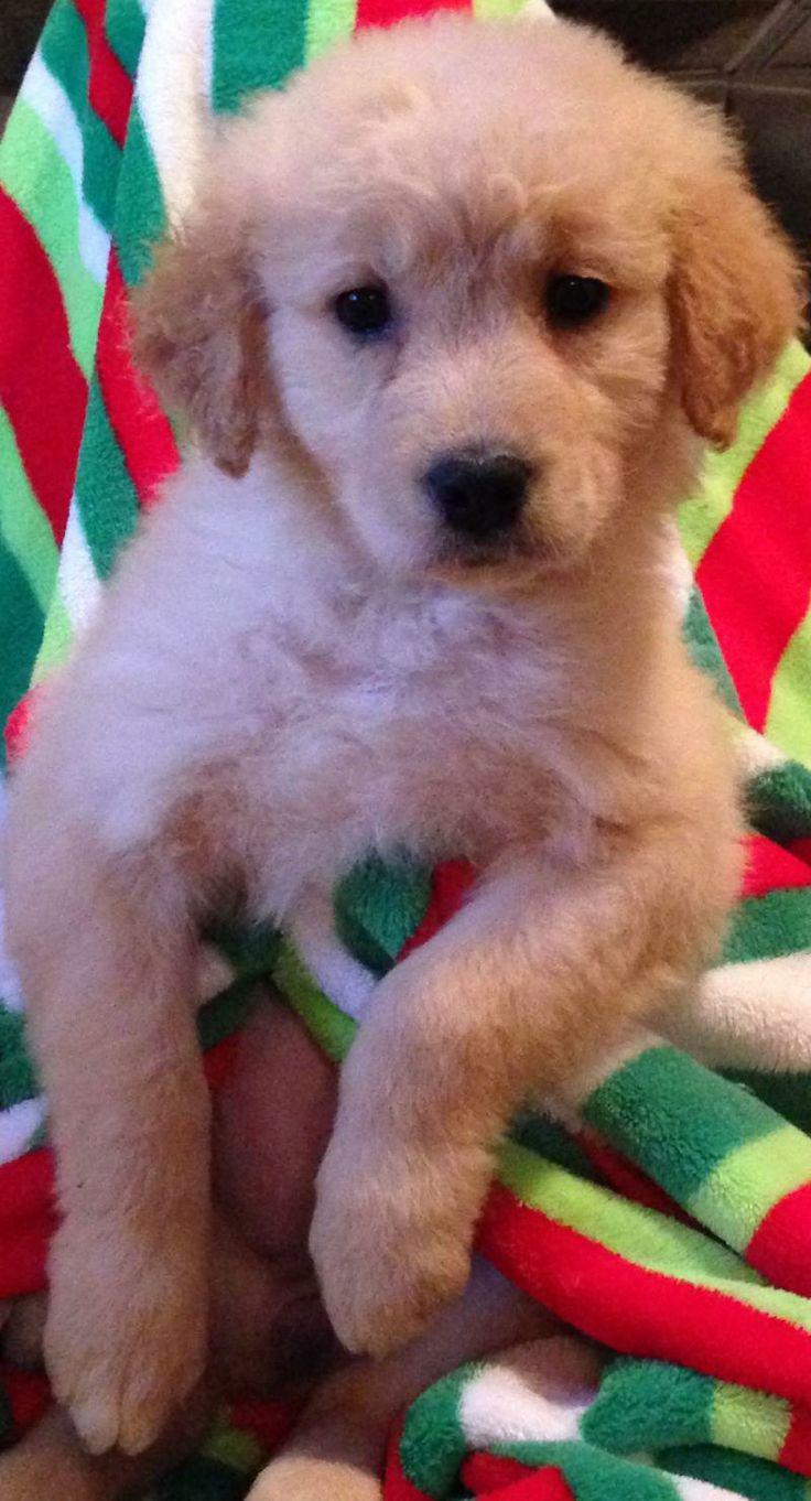 Adopt gabby on petfinder dog adoption doggy dogs
