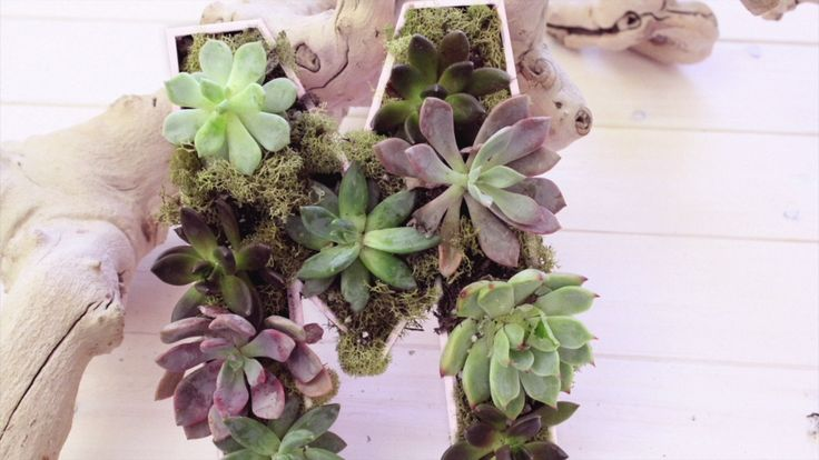 Create Your Own Wall Garden With Paper Mache Letters