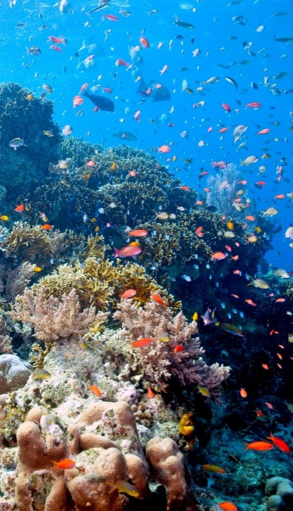 Explore Bali's underwater scenery on a snorkeling expedition at Menjangan Island.