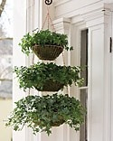 Hanging wire basket planter- kitchen basket hanger, moss, ivy