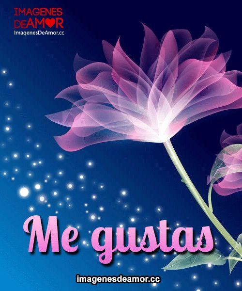 Rosa Rosada Con Encendido De Luz Y Frase Me Gustas Te Quiero