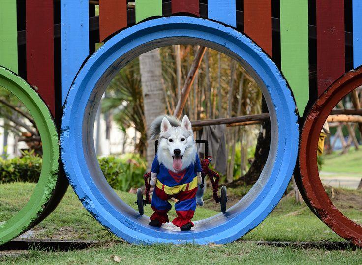 Supermaya Dog Wheelchair
