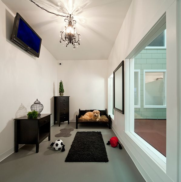 Jet Pet Resort The Ultimate Friendly Hotel At Affordable Cost Dog Hotels