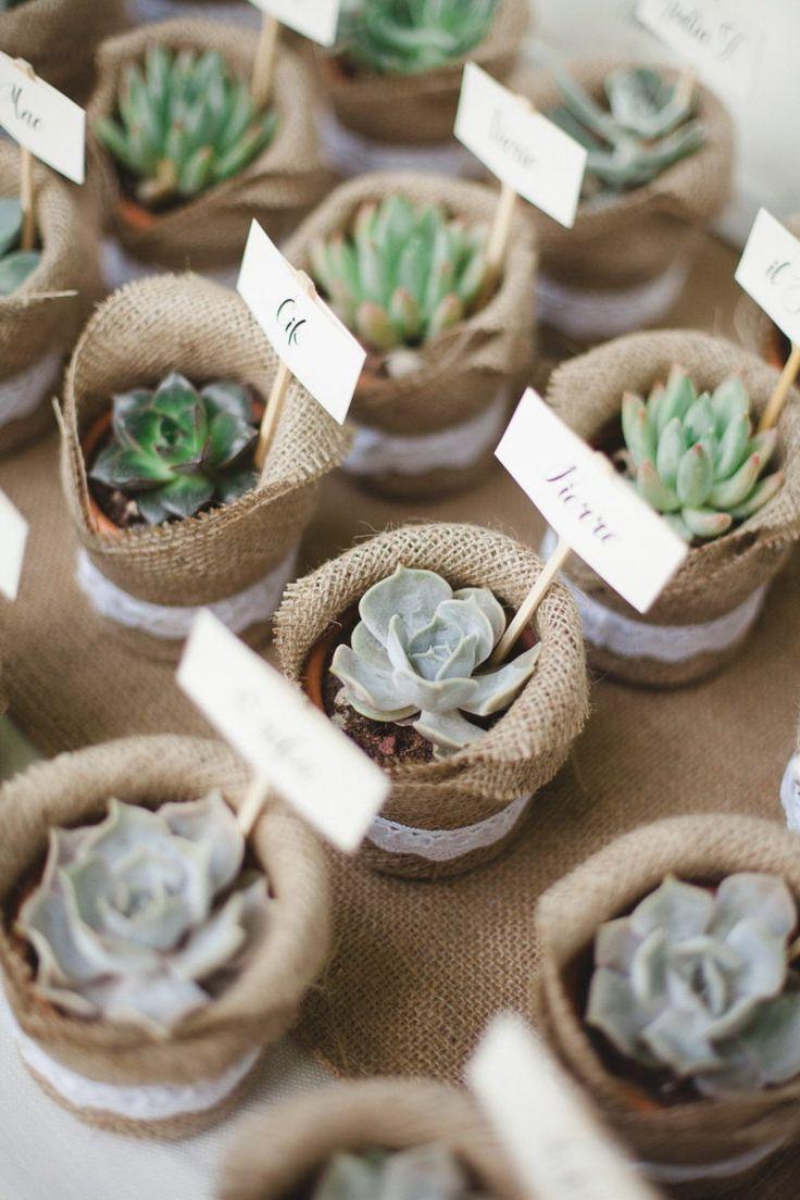 piante succulente escort card