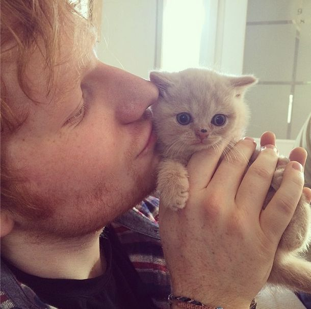 We've got 8 pics of Ed Sheeran with cats that will make your heart melt! Check it out!