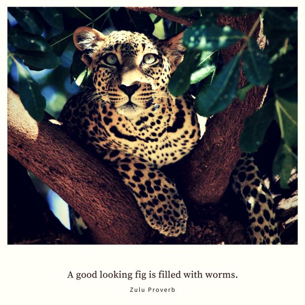 A good looking fig is filled with worms. – Zulu Proverb