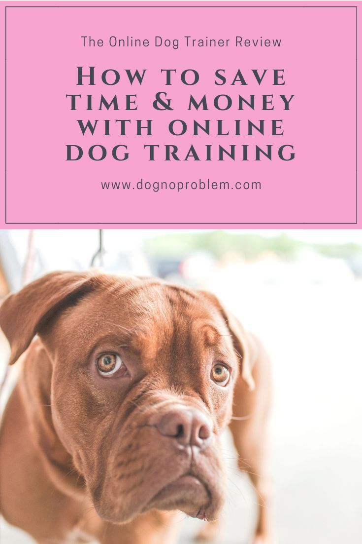 Lp 4 Free Dog Training Videos 2 Blu Dog Training Videos