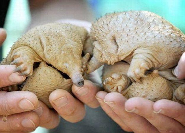 25 Adorably Tragic Half-Shaved Animals