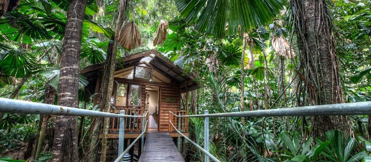 Cabin Accommodation   Daintree Accommodation - Daintree Wilderness Lodge